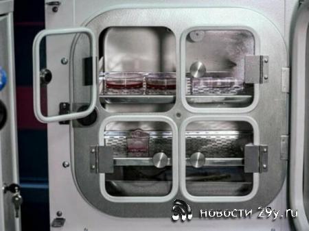 В России создали котлету из искусственного мяса, всего за 900 тысяч рублей
