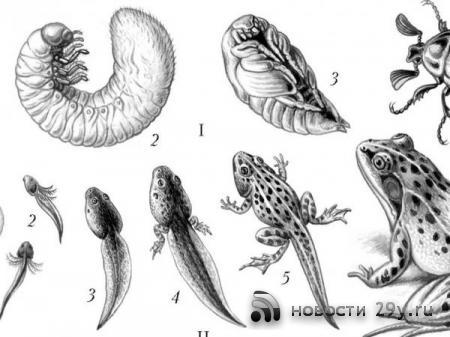 Метаморфоза в биологии коротко