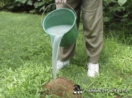 Как можно избавиться от муравьев и тли простыми способами