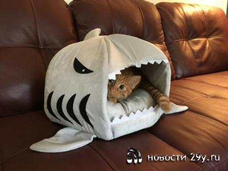 Как и почему кошки выбирают определенные места для сна